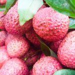 果物の中で葉酸が一番多いライチ