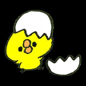 卵の殻とひよこ